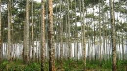 reforestacion-Noticia-731822