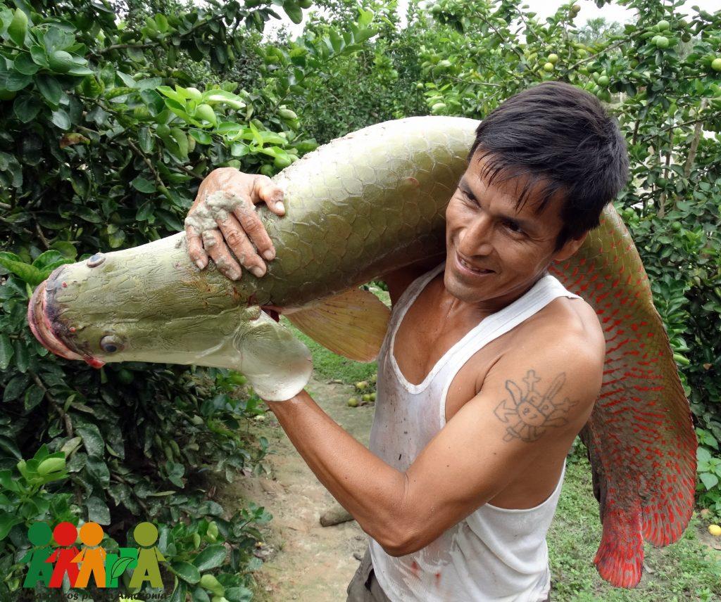 Paiche amazónico, un mundo de posibilidades para la cocina peruana y nikkei